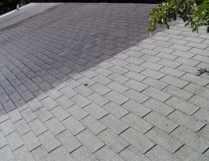 Roof cleaning process in St. Louis